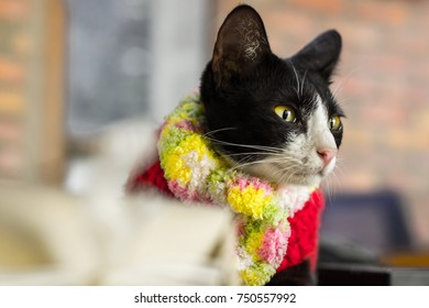 Cute cat in colorful scarf and wearing red winter clothe in winter season looking to the right side, winter concept, winter life style