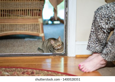 A cute cat, crouched in a doorway indoors, getting ready to pounce on her owner's feet.