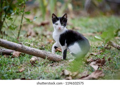 Cute cat cub in the garden with black and white fur / Kitten at play outside in the grass this autumn
