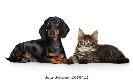 Cute cat and dog lying down on white floor