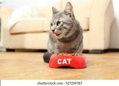 Cute cat eating food at home