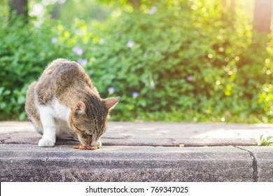 cute cat eating food in ourdoor park