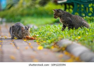 cute cat eating in ourdoor park
