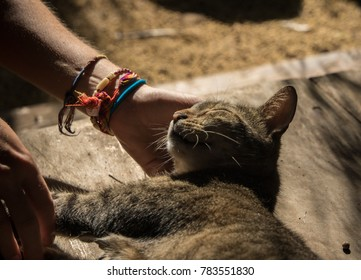 Cute cat enjoying caressing