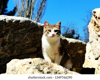 A cute cat in Ephesus old city, a kitten sit on rocks and watch tourists with a blue sky background in spring. Ephesus, Turkish:Efes, was anancient Greekcity derive fromHittiteApasa.