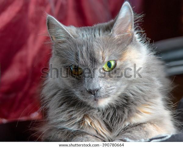 cute-cat-face-on-deep-600w-390780664.jpg