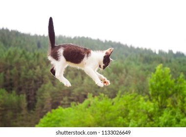 cute cat flying and falling in the nature. closeup