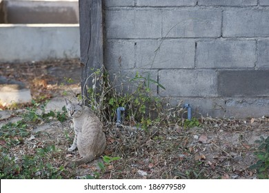 Cute cat in front of old wall