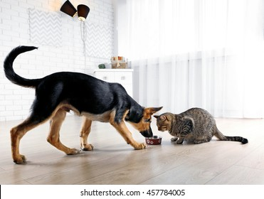 Cute cat and funny dog eating food