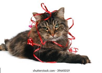 Cute Cat Gift
