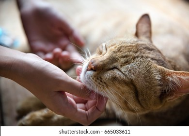 Cute cat and girl hand