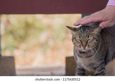 Cute cat with hand who is playing with cat.