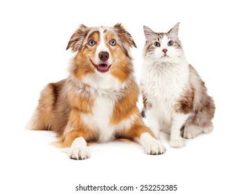A cute cat and happy Australian Shepherd dog, sitting together