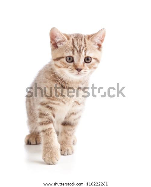 Cute Cat Kitten On White Background Stock Photo Edit Now