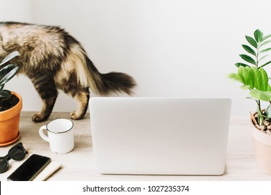 cute cat and laptop on wooden desktop with phone, notebook, coffee cup and plant in stylish modern room. Freelance concept. business workspace in home or office. working home