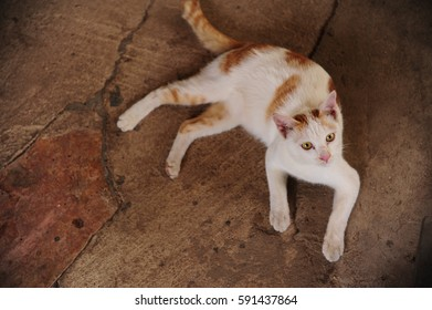 cute cat laying down on the floor