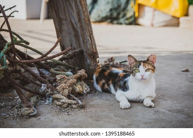 Cute cat is laying on a street