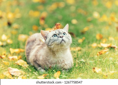 Cute cat with leaf on the head outdoors in fall. Cat lying on the grass