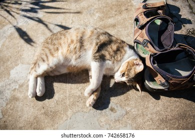 The cute  cat lies on the ground on morning.