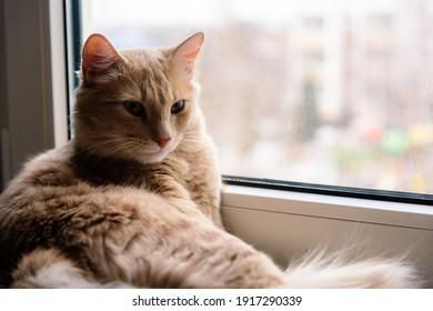 cute cat lies on the window