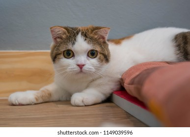 cute cat looking