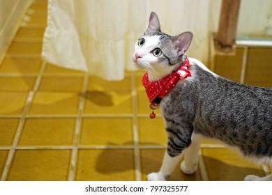 cute cat looking kitty face