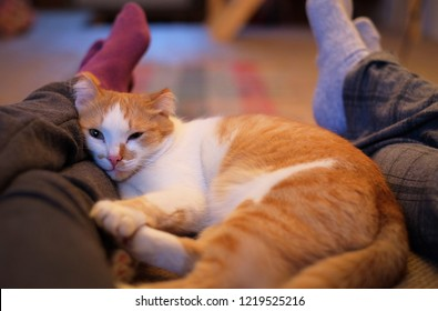 cute cat lying between man and woman legs