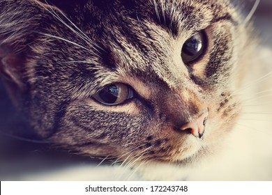 Cute cat lying in lazy, sleepy pose looking at the camera with its magnetic eyes. Close portrait, warm light