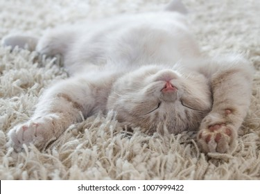 a cute cat lying on the back like on a carpet, almost same color