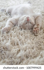 a cute cat lying on carpet, almost same colour