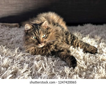 a cute cat lying on a carpet