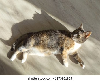 cute cat lying on the floor in the sun