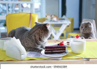 Cute cat lying on table served in cafe