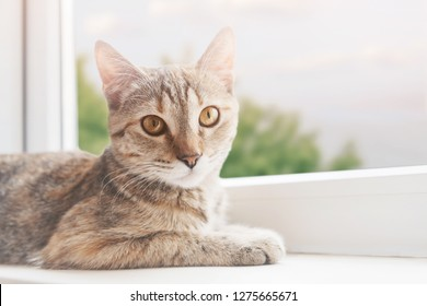 Cute cat lying on the windowsill, staring at camera. Green trees outside the window.
