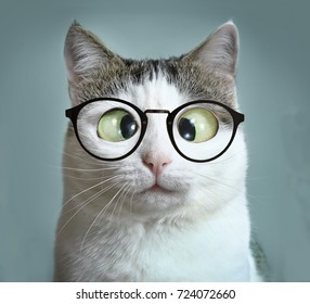 cute cat in myopia glasses squinting close up funny meme portrait on blue wall background