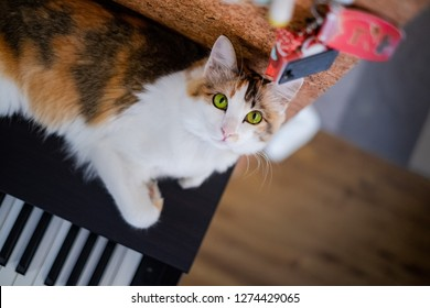 A cute cat is on the piano