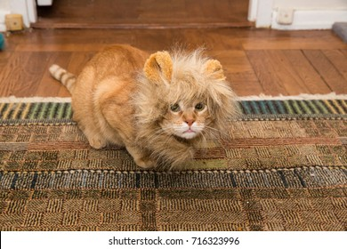 cute cat on rug with lion costume mane and ears