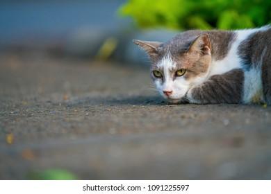 cute cat in ourdoor park