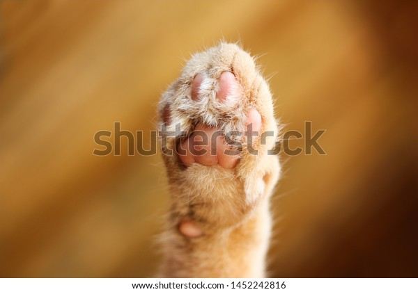 Cute cat paw print from below with soft orange fur with blurred orange background.