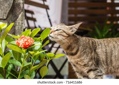 cute cat and plant