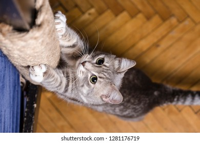 Cute cat playfully sharpening his sharp claws on the wooden beam wrapped in rope. Close-up.