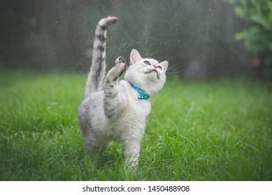 Cute cat playing in the park  on rainy day