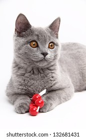 Cute cat  plays with toys on white background