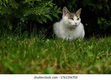 El lindo gato posando en el pasto