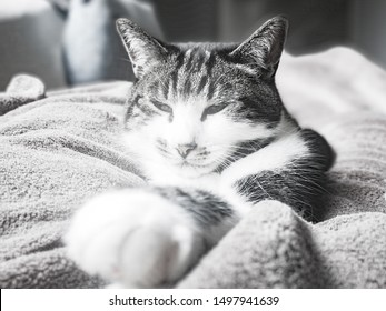 Cute cat relaxing on a bed