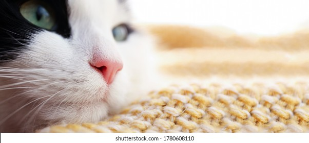 Cute cat relaxing on yellow knitted fabric at home, space for text. Banner design