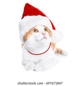 Cute cat in Santa Claus hat on white background