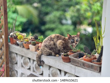 Cute cat sit beside cactus garden on wall, Pet at home
