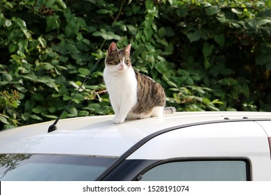 cute cat sits on the roof of a car in the sun