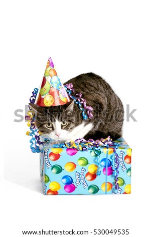 Cute Cat Sitting On A Birthday Gift Isolated White Background